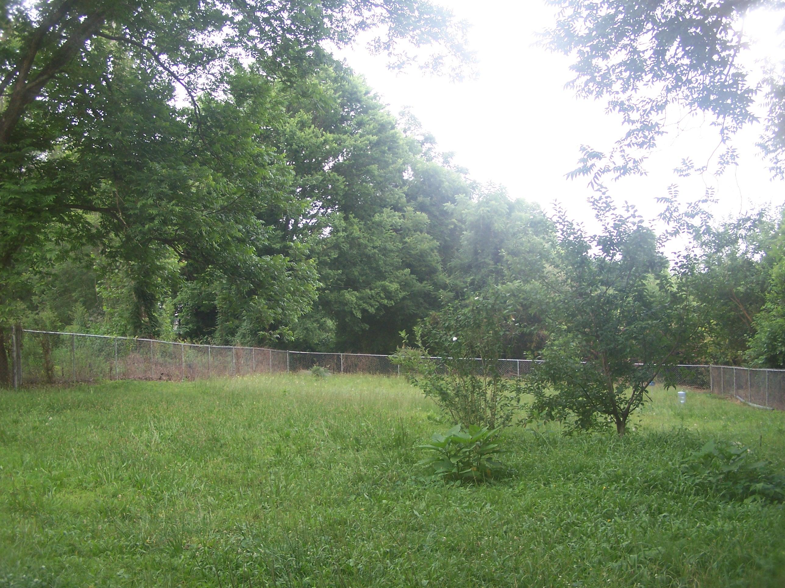 bungalow 404 backyard before