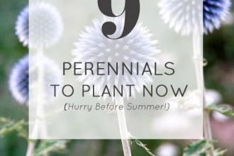 9 perennials