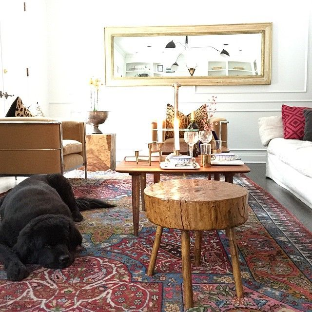 beautiful newfie in living room